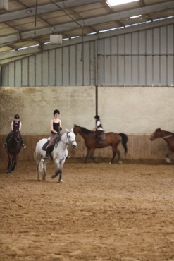 MANEGE CHEVAUX1
